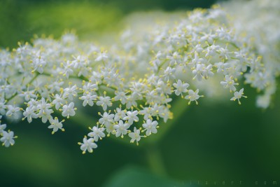Party day – Pistils flowers / macro photographies ©LilaVert