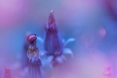 Ladybug fantasy world ©LilaVert