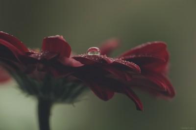 Macro proxy flower ambiance – ©LilaVert / Nikon D300 – Sigma 150 macro