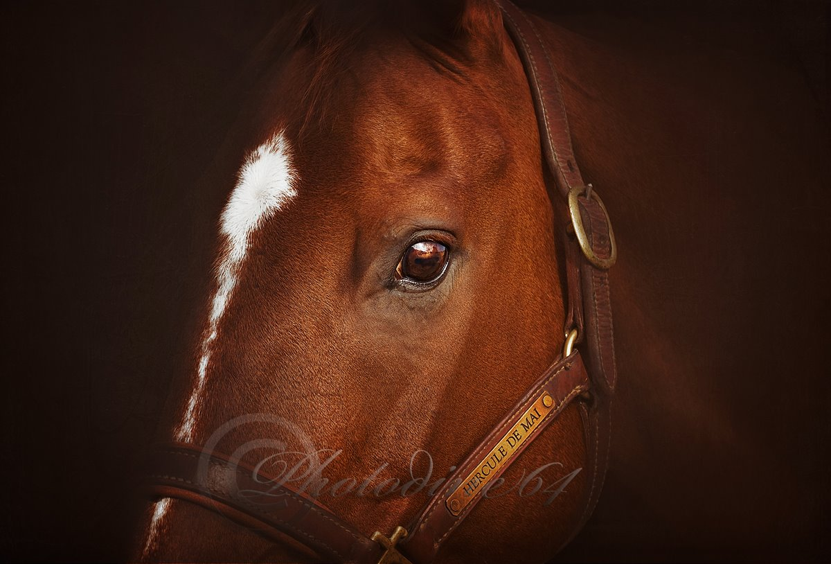 photodine64-photo-chevaux