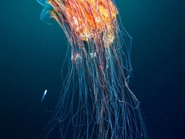 Alexander Semenov – Sea photography