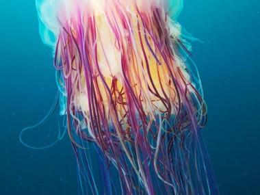 semenov – octopus