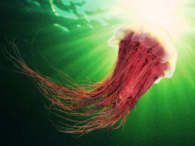 semenov – octopus3