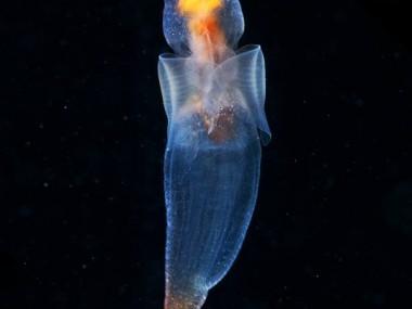 semenov – stranger sea