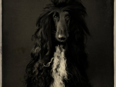 Karel Veprik – dog photography