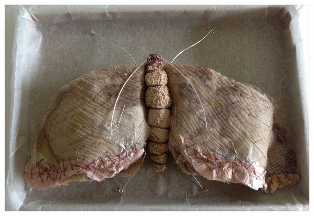 Script Moth , Caroline Lingwood - papillon