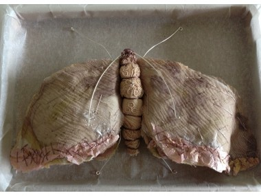 Script Moth , Caroline Lingwood – papillon
