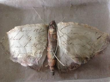 Script Moth , Caroline Lingwood2
