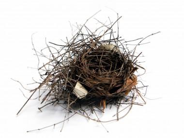 mary jo hoffman -cardinal-nest-2