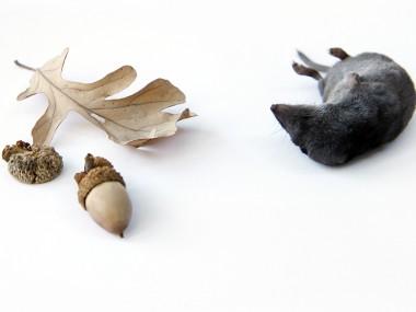mary jo hoffman -shrew-with-acorn1