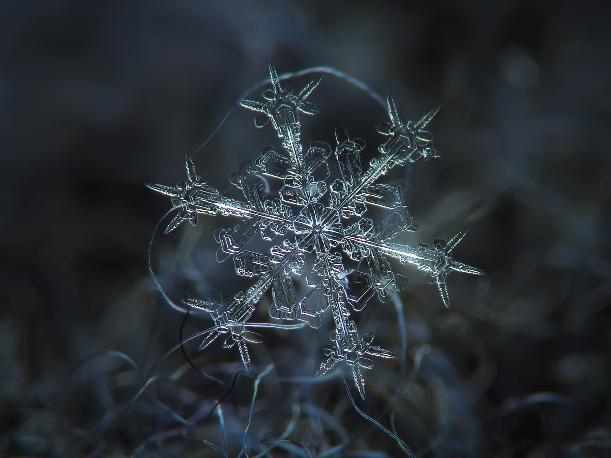 Alexey Kljatov- ChaoticMind75 – snowflake cristal macro photography