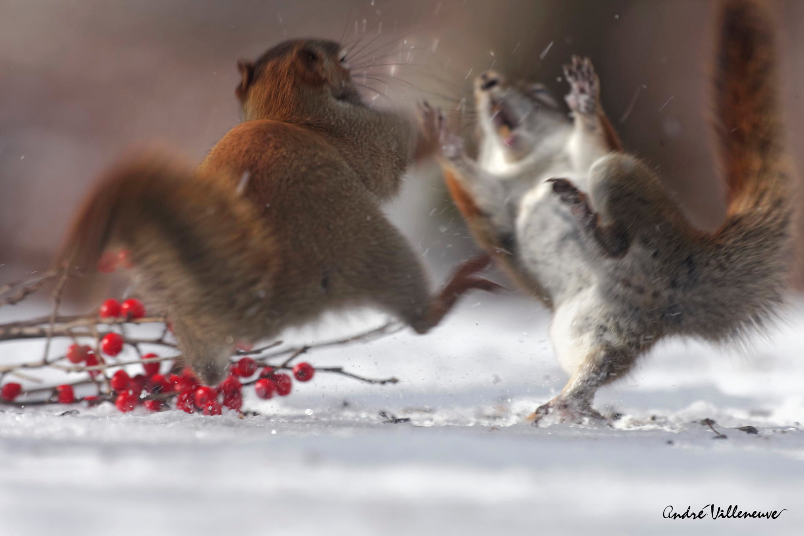 Andre Villeneuve –  Nature photography –  Boxing day