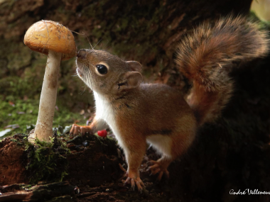 Andre Villeneuve –  Nature photography –  Here my dinner