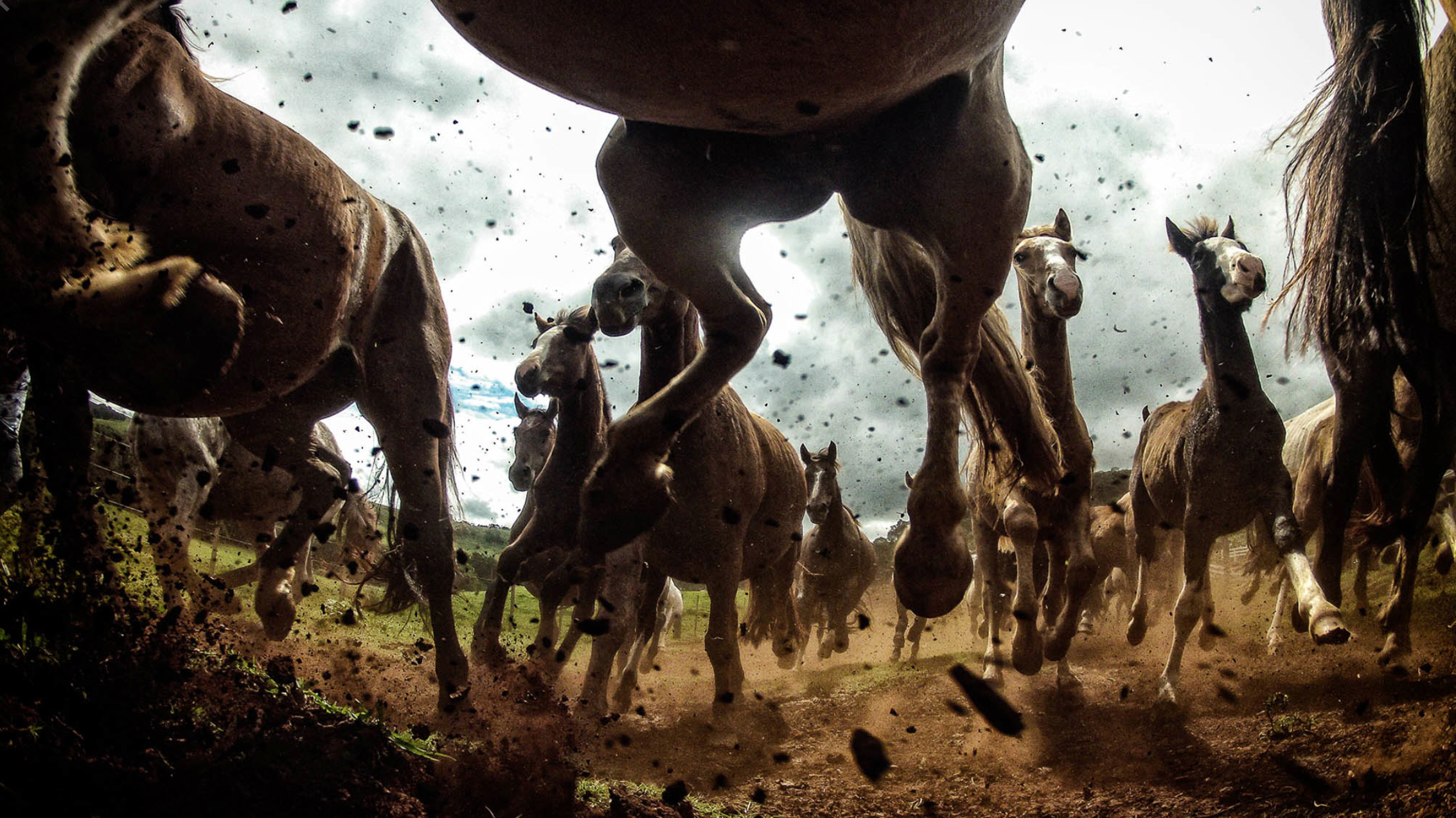Chris Schmid – horses – photography nature, sport