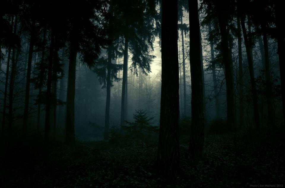 Jan Machata – Photography – forest ambiance