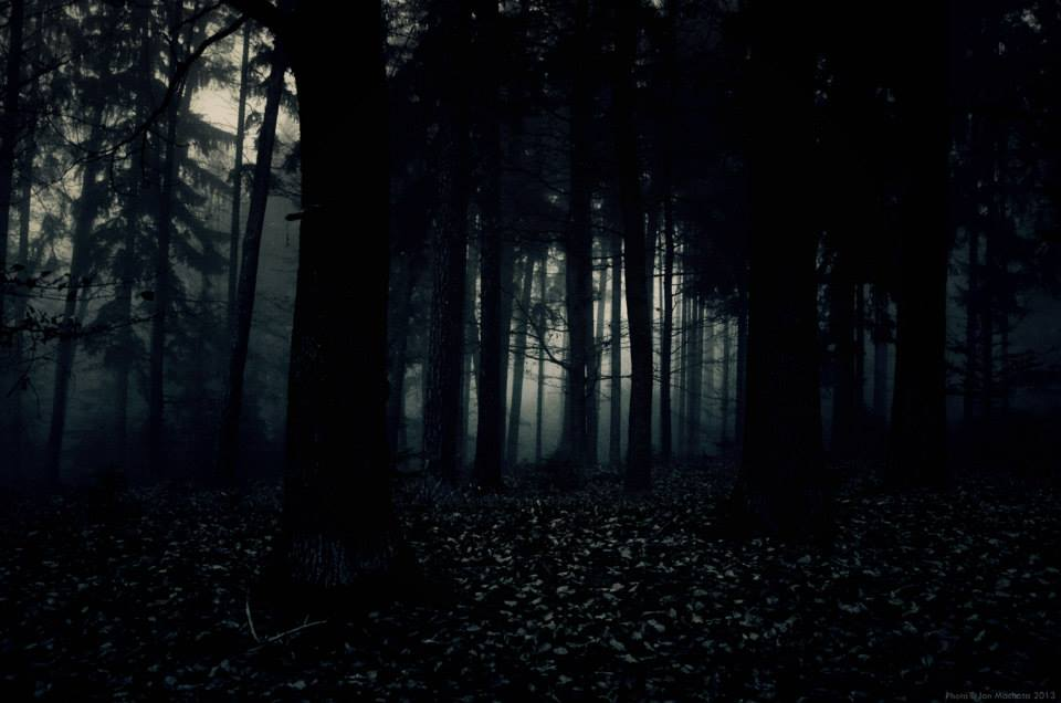 Jan Machata - Photography - forest ambiance