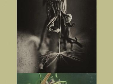 Monica Raduta – Beautiful digital photography
