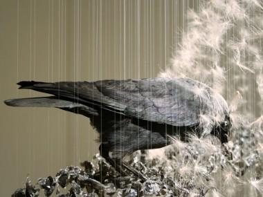 Caire Morgan – installation corbeau / cow – aerial taxidermy art