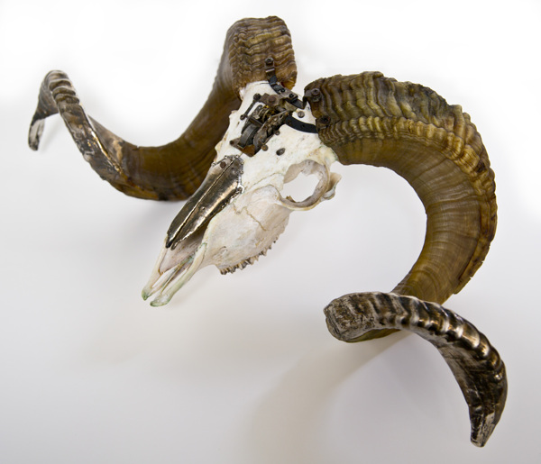 Departed Ram 541 – Lisa Black / Taxidermy sculpture art