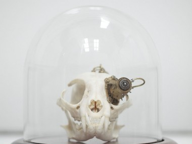 Departed Skulls – Lisa Black / Taxidermy sculpture art