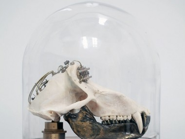 Departed Skulls2 – Lisa Black / Taxidermy sculpture art