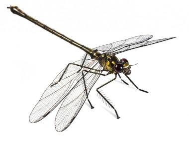 Edouard Martinet – Dragonfly – 37″ x 49″ x 15″  / steampunk sculpture art