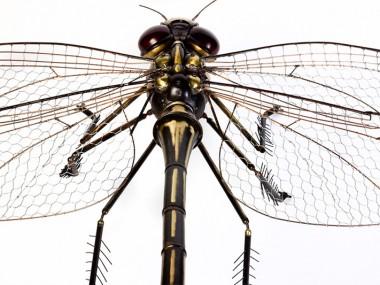 Edouard Martinet – Dragonfly detail – 37″ x 49″ x 15″ / steampunk sculpture art