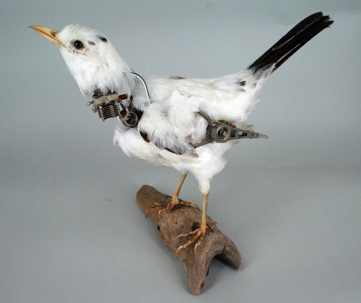 Fixed Black Bird by Lisa Black / Taxidermy sculpture art
