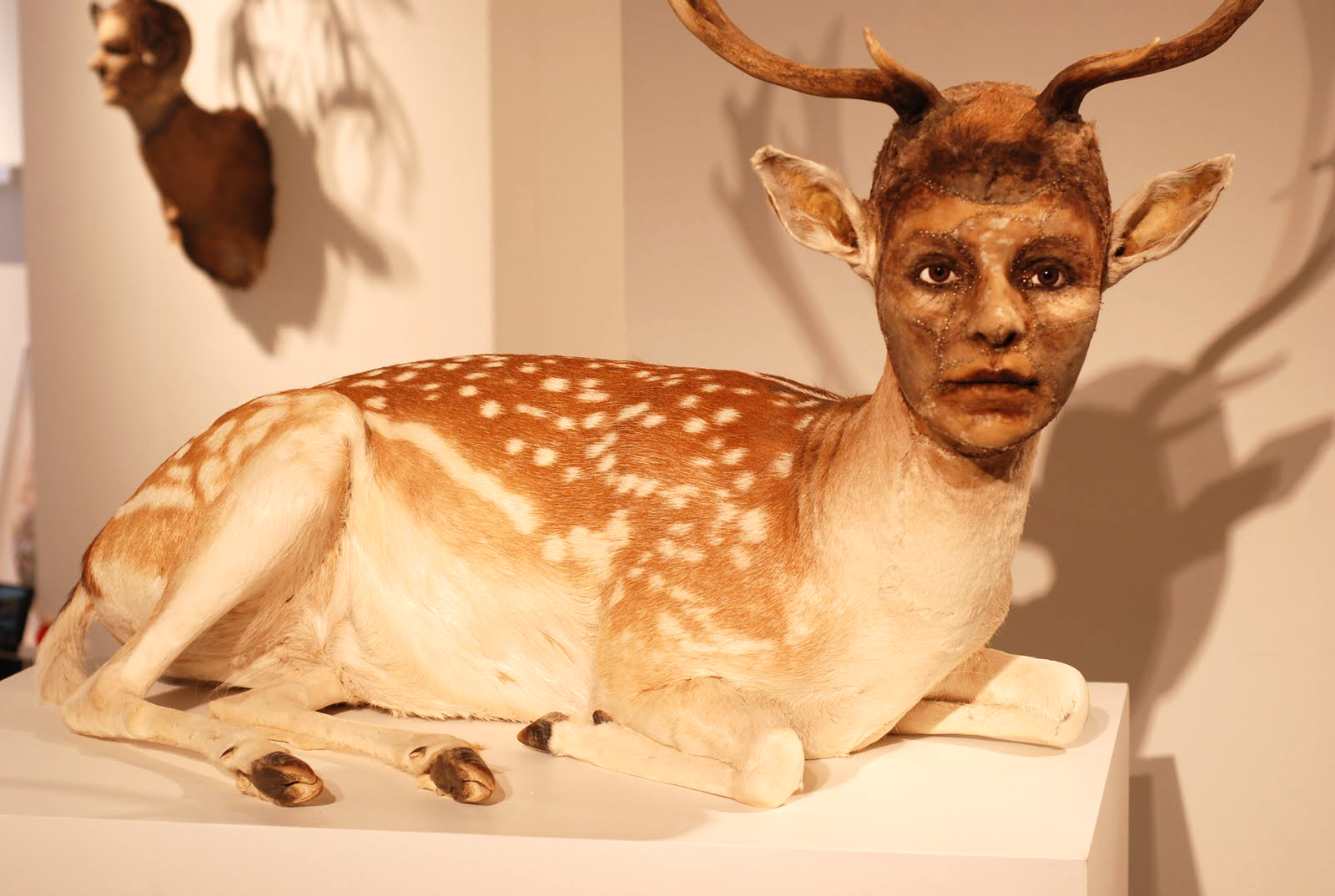 taxidermie homme
