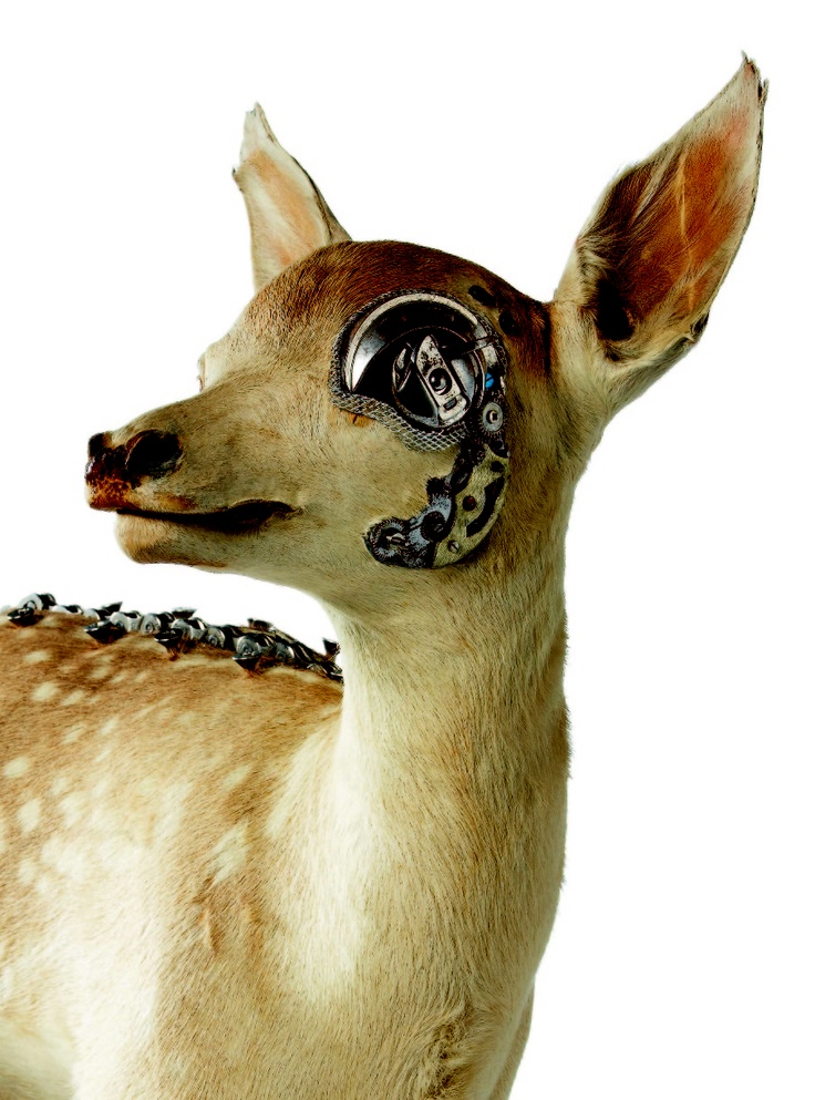 Lisa Black – Fixed Fawn / Taxidermy sculpture art