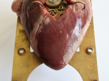 Lisa Black – Heart / Taxidermy sculpture art