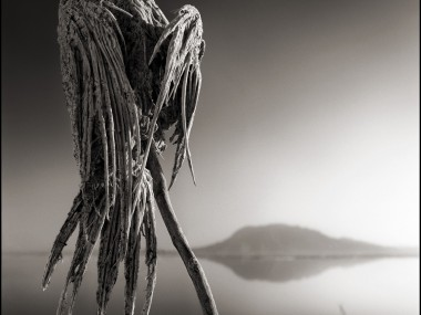 Nick Brandt – Tanzania lake – birds