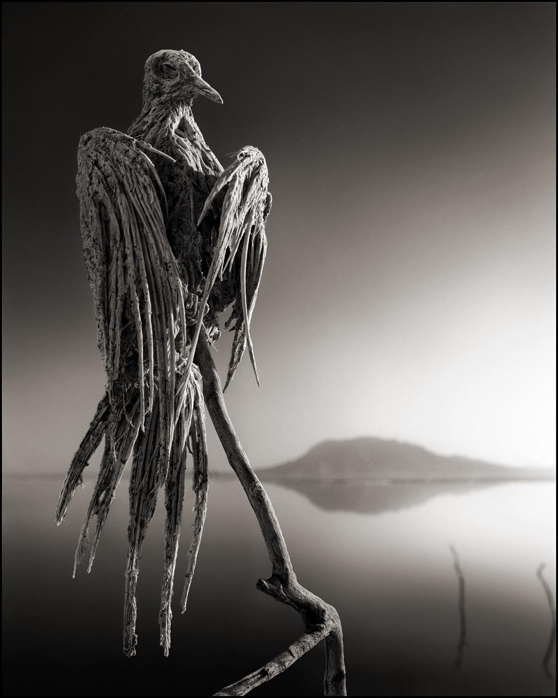 Nick Brandt – Tanzania lake – birds