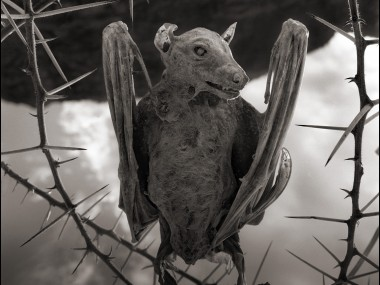 Nick Brandt – Calcified Bat II – damned tanzanie lake