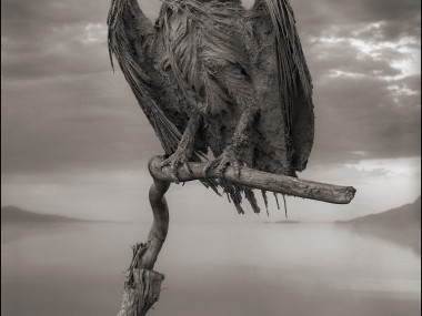 Nick Brandt – Calcified Fish Eagle, damned tanzanie lake