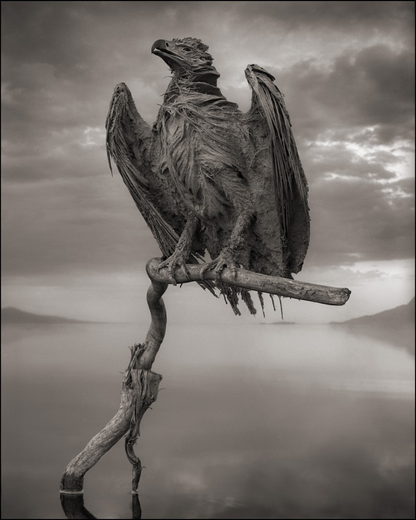 Nick Brandt - Calcified Fish Eagle, damned tanzanie lake