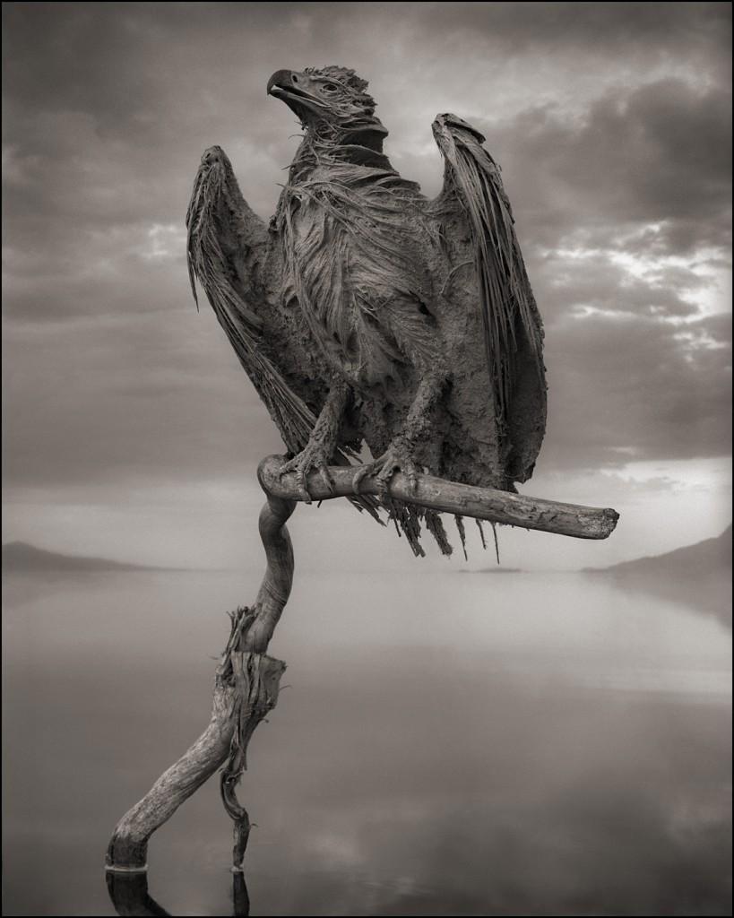 Nick Brandt - Calcified Fish Eagle, damned tanzanie lake