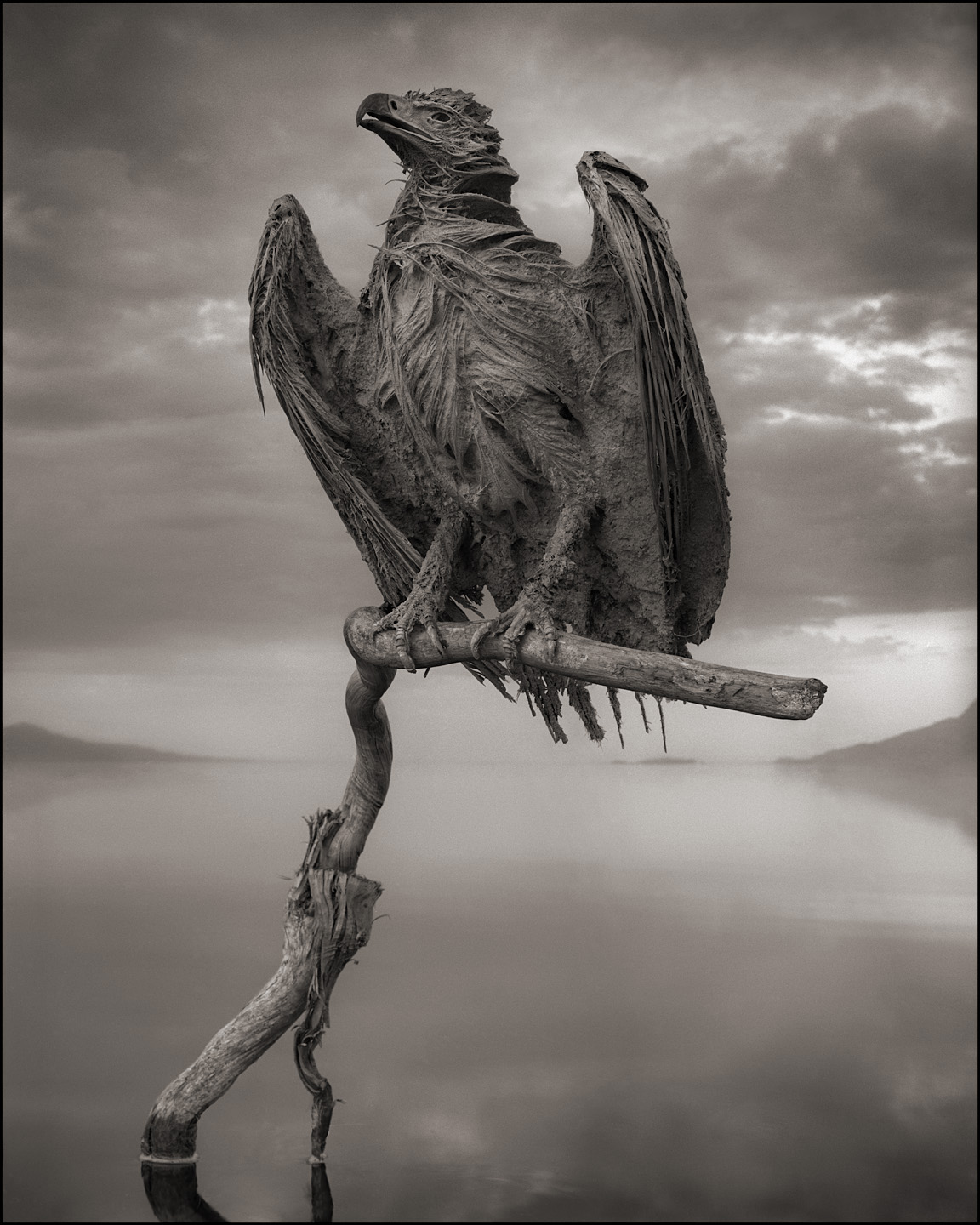 Nick Brandt – Calcified Fish Eagle, damned tanzanie lake