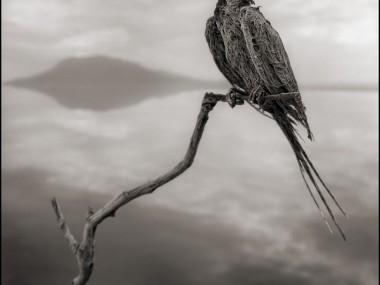 Nick Brandt – raven, damned tanzanie lake
