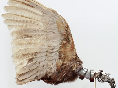 Pheasant Wings – Lisa Black 2012 / Taxidermy sculpture art