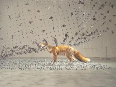 claire Morga, – taxidermy, – renard-fox – aerial taxidermy art