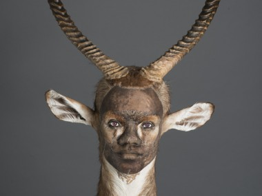 kate clark – taxidermy sculptures – Asserting His Influence