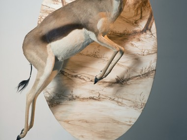 "kate clark – taxidermy sculptures ""Charmed"""
