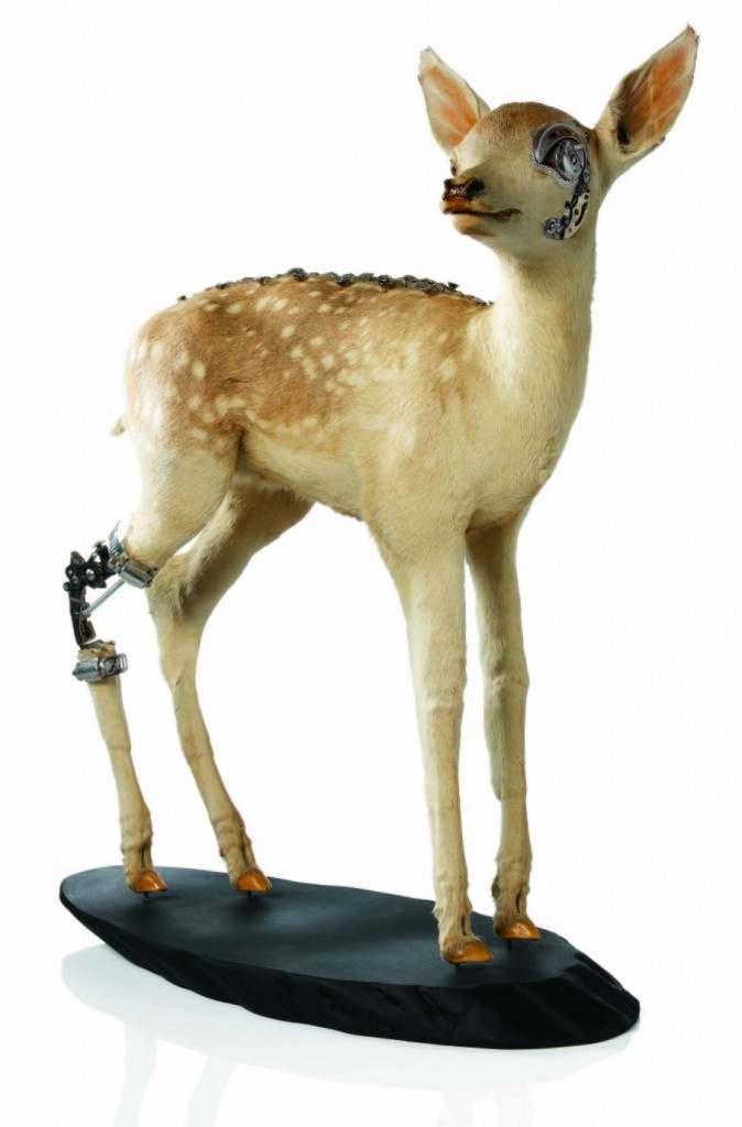 lisa black- fixed faon / Taxidermy sculpture art