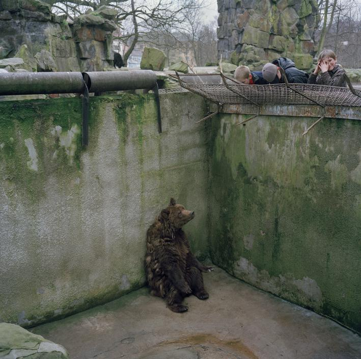 Peter Marlow, A bear sits alone in a pit in Kaliningrad zoo