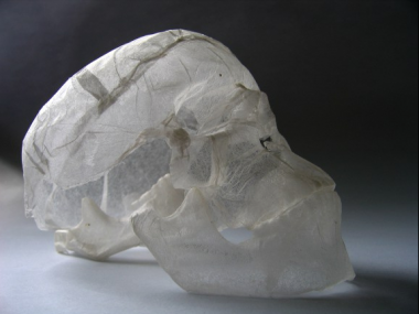 polyscene – tissue paper sculpture – skull