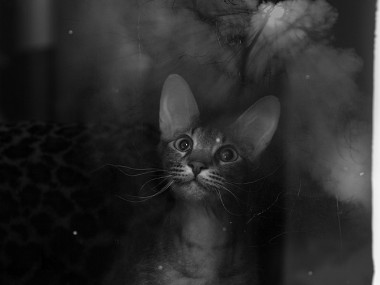 Alexey Sovertkov : photography cat