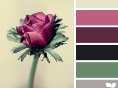 FloraHues_22 – design-seeds – choix teintes, tons, couleurs