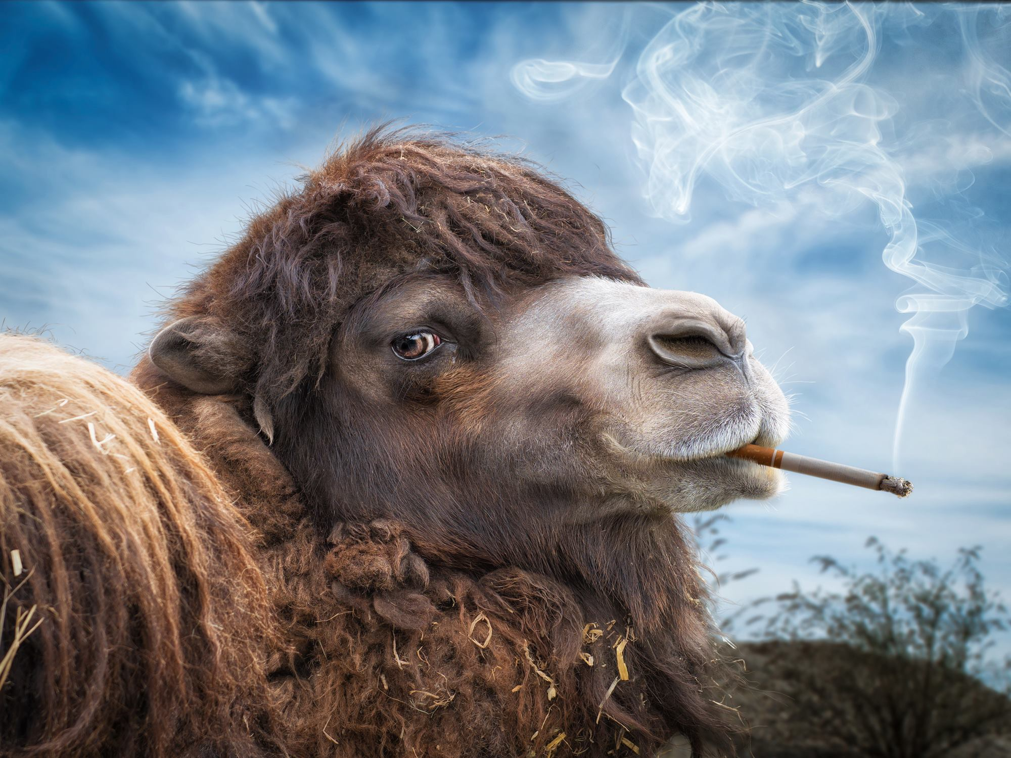 John Wilhelm is a photoholic – A Camel with Marlboro / retouches photos