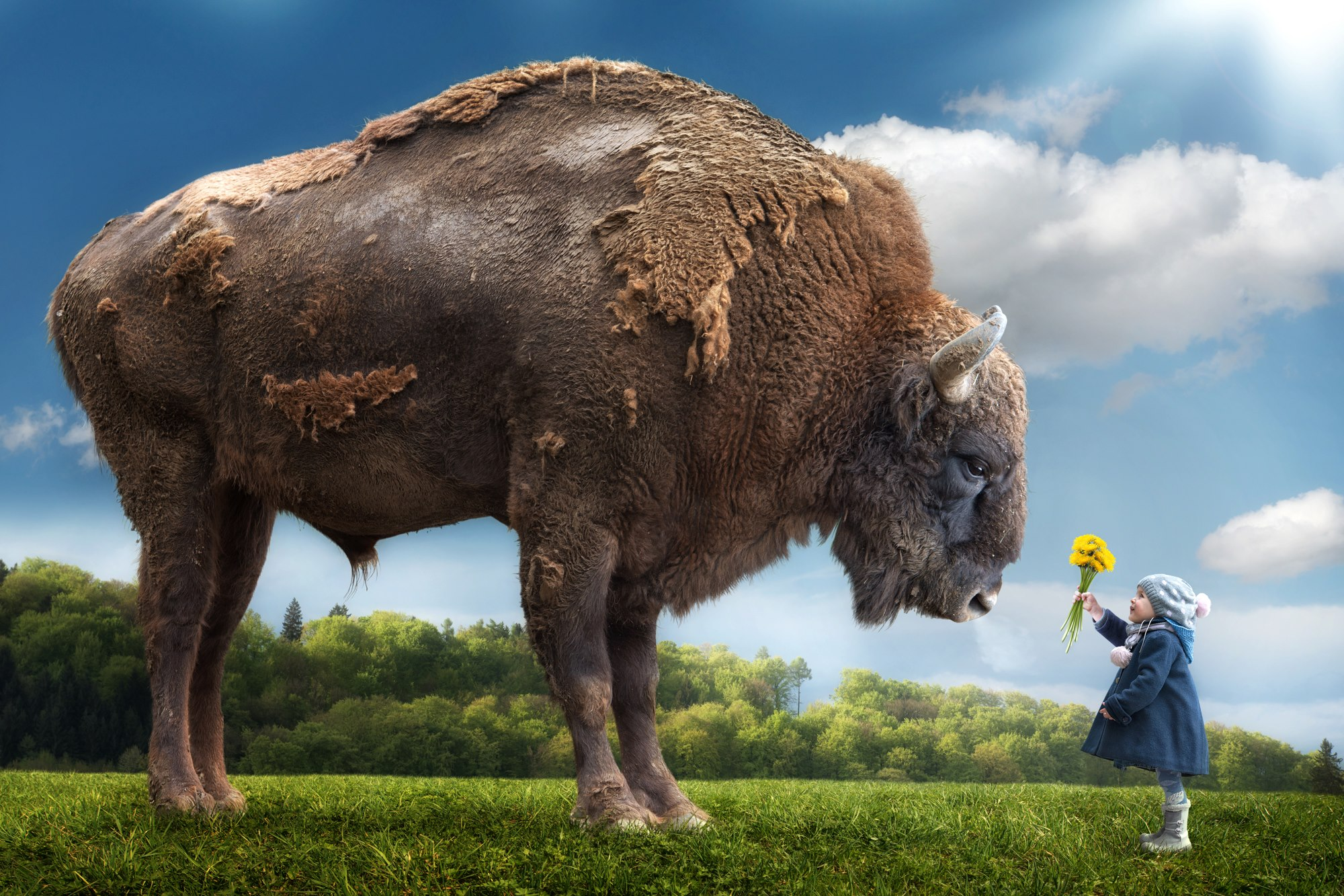 John Wilhelm is a photoholic – Bizon and girl – Disarming innocence